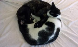 two cats sleeping together in a circle head to tail