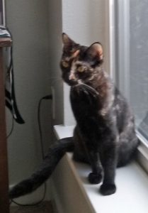 Tortie cat with gold and brown highlights and mostly black fur. Distinctive gold tips on inner ears and down the nose.
