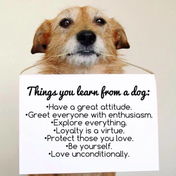 Picture of Dog with a sign. Things you learn from a dog