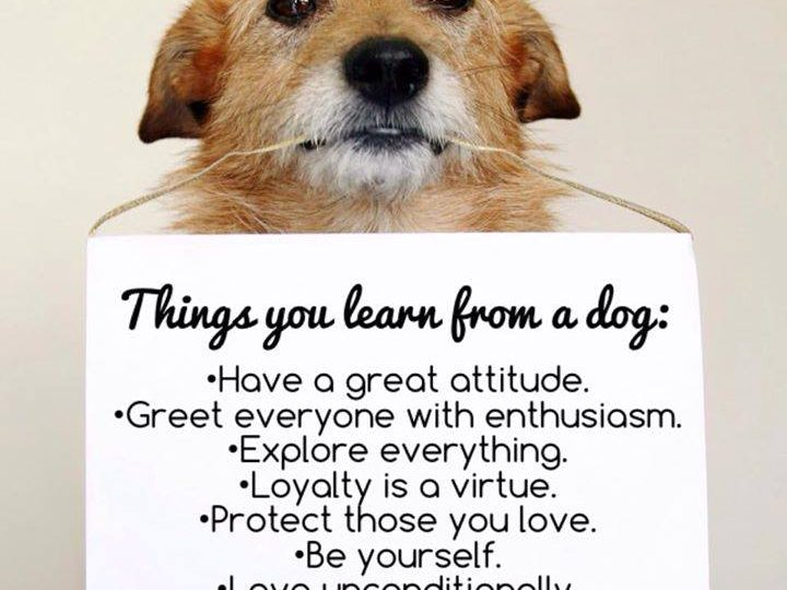 Things You Learn From a Dog