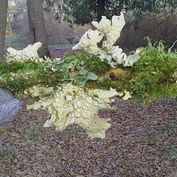 white lichen and green moss