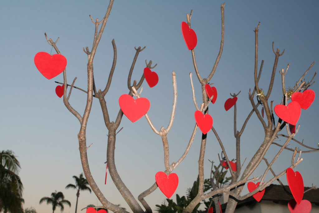 picture of tree branches with red hearts attached