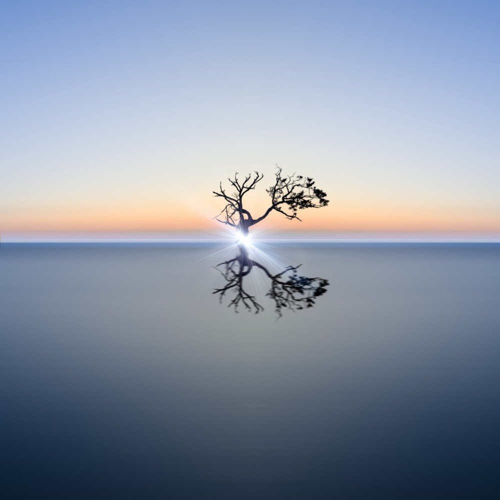 a leafless tree in the middle of water at sunset with a bright light shining from it
