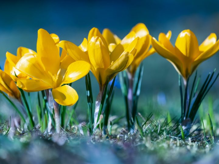 Spring and the Promise of Renewal