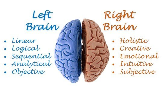 illustration of left brain and right brain--left brain logical sequential analytical. Right brain holistic, creative, emotional